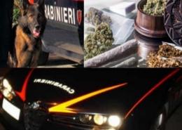 Droga_Bologna_nuovi arresti_def